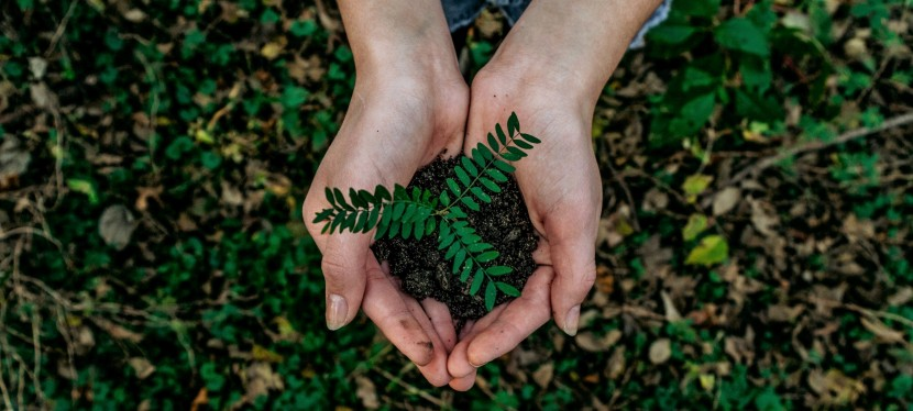 5 Million Trees in 5Years